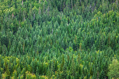Sustainability:  It's not just about the trees